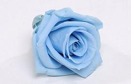 Rozenkop 5cm Lichtblauw