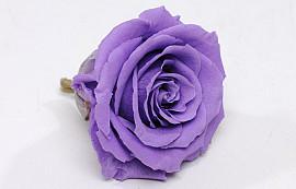 Roses préservé 5cm Lila