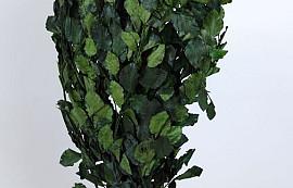 Beukenblad Groen 1kg