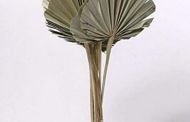 Spades Spears Palm 40-55cm