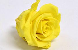 Rosenköpfe 5cm Hell Gelb