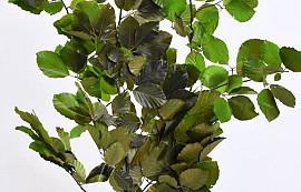Beukenblad Groen 80cm