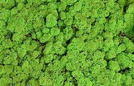 Reindeer Moss Spring Green per kg