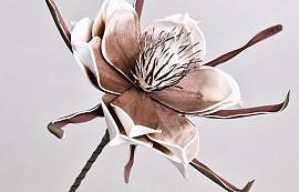 Blume Schaumstoff Weiß-Mocca, D 20cm