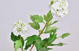 Viburnum 40cm Wit