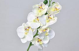 Orchidée Papillon 50cm Blanc