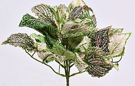 Fittonia Plant 25cm groen