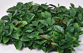 Photinia mat 50x50cm