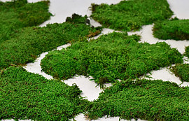 Sheet Moss green per kg