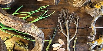 Branch & Wood