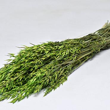 Avena Green 70cm