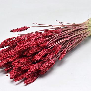Tarwe Rood 70cm