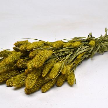 Setaria Geel 65cm