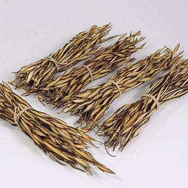 Fire Grass Bunch 30-40cm