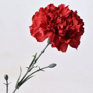 Dianthus 60cm Rood