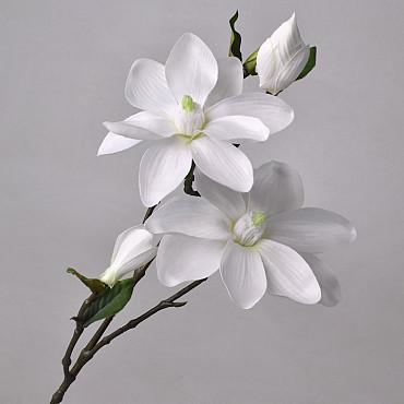 Magnoliatak 75cm Wit