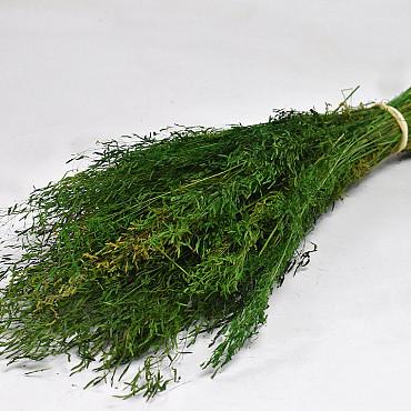 Munni grass Green 60cm
