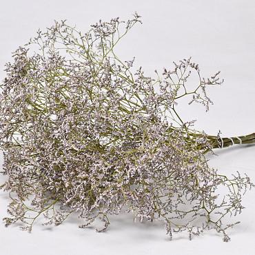 Limonium 60cm Light Lilac
