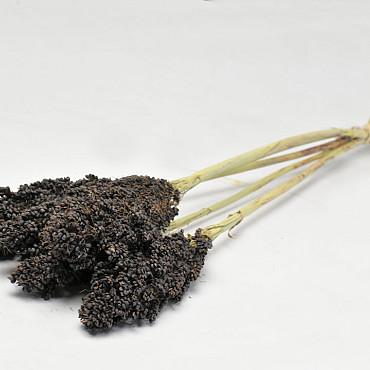 Sorghum 70cm Zwart
