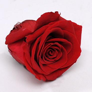 Roses préservé 5cm Rouge