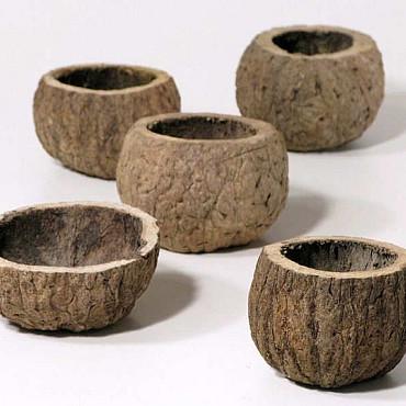 Ourico 8-10cm