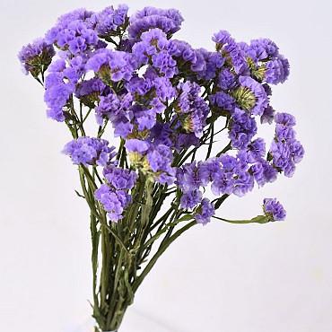 Statice Sinuata Violet