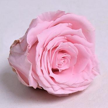 Rozenkop 5cm Pastel Roze