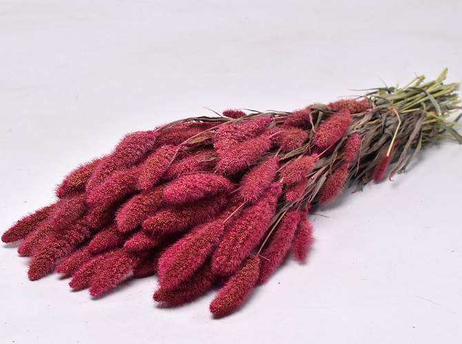 Setaria Roze 65cm