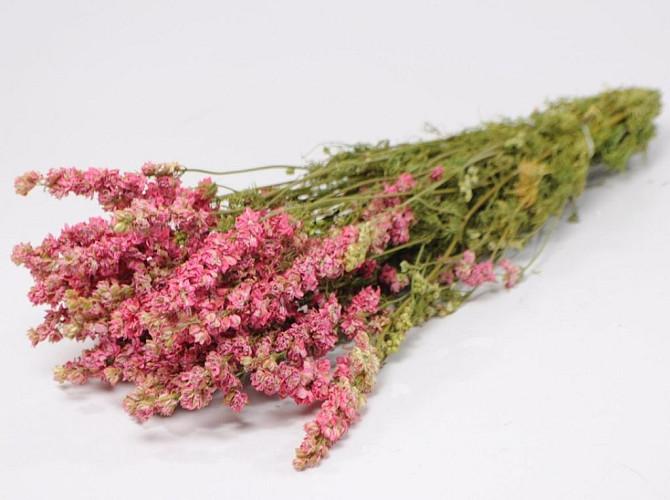 Delphinium Pink 65cm