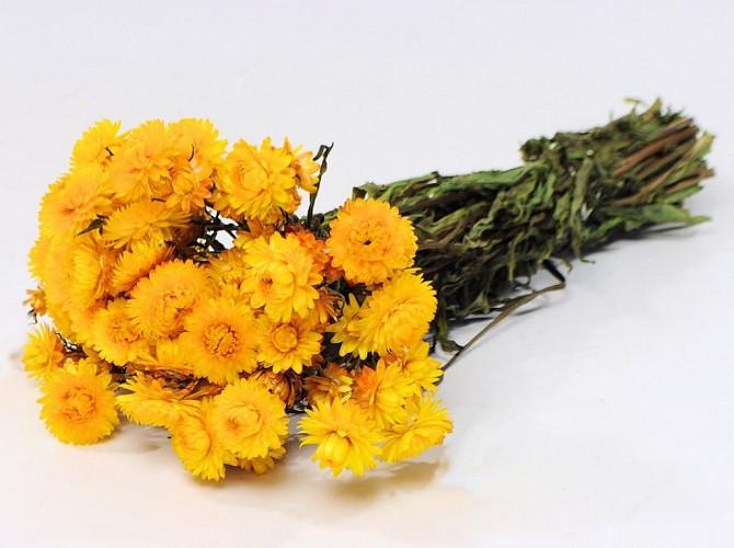 Helichrysum Geel 45cm