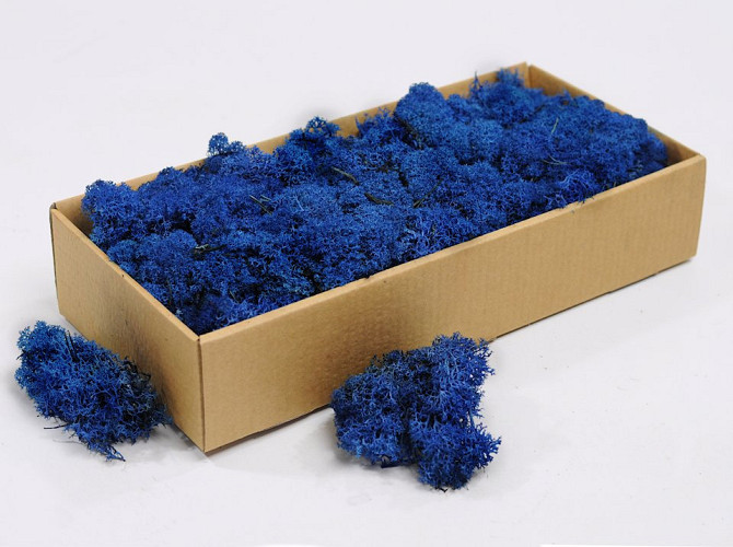 Lichen stabilisé Bleu 500gr.