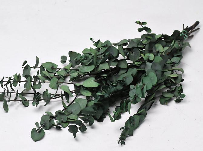 Eucalyptus Stuartiana Groen 65cm