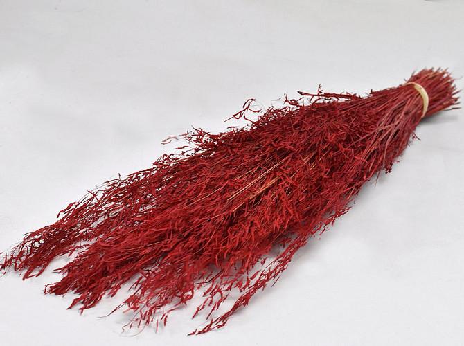 Munni gras Rood 60cm