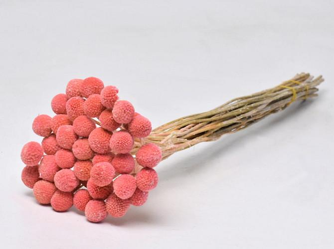 Craspedia Pastel Peach 40pcs