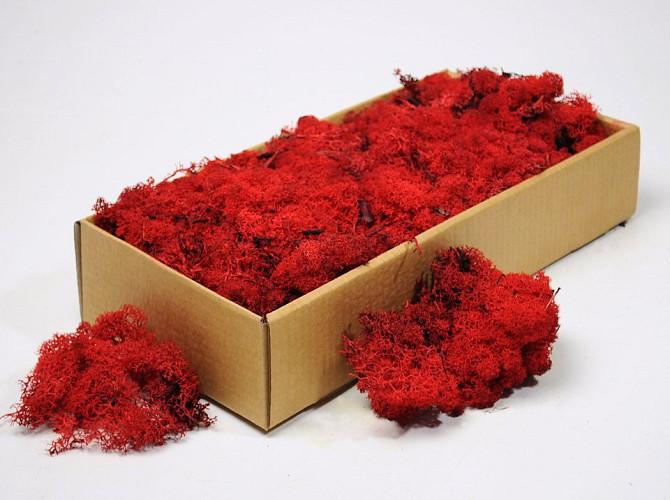 Lichen stabilisé Rouge 500gr.