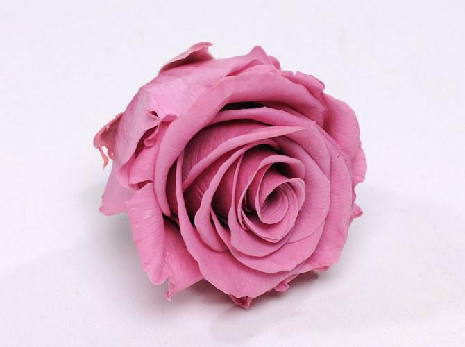 Roses préservé 5cm Rose
