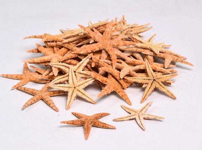 Étoiles de mer 50pcs.