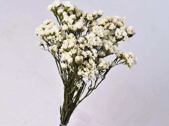 Statice Sinuata White