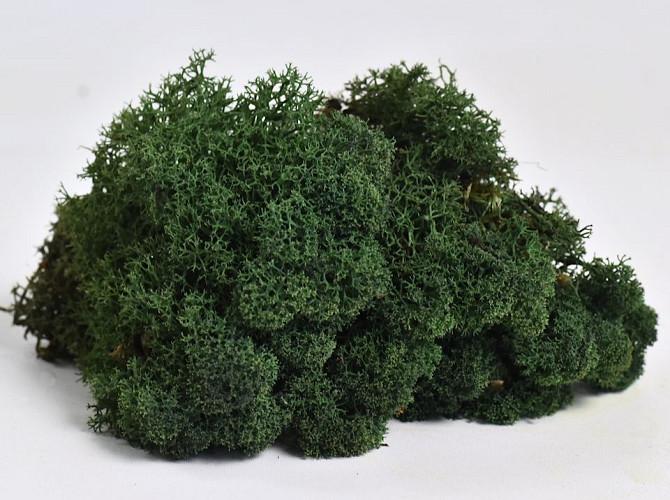 Reindeer Moss Dark Green 40g.