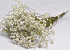 Limonium Sinensis 70cm