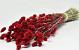 Bouquet Phalaris Rouge 70cm